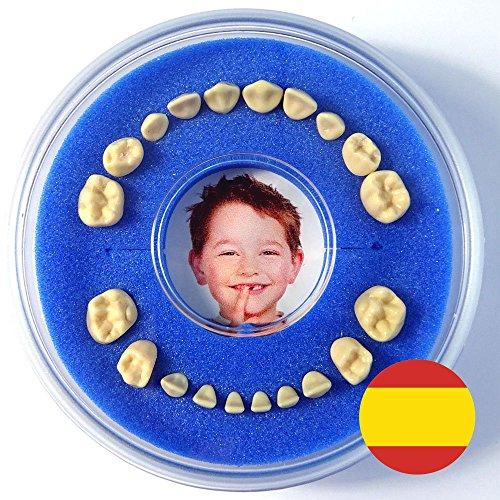 Firsty Cajita para Dientes de Leche Round --- (Azul, Chico) ABF con Texto en Espagnol, Envío rápido