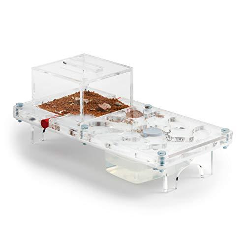 AntHouse - Hormiguero Acrílico - Kit Educativo Seta 10x20x1,3 cm (Hormigas Gratis)