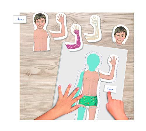 Clementoni- Montessori: El Cuerpo Humano Juego Educativo, Multicolor (55292)