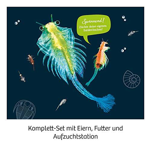 KOSMOS- Urzeit-Krebse Kit de experimentación para niños (657871)