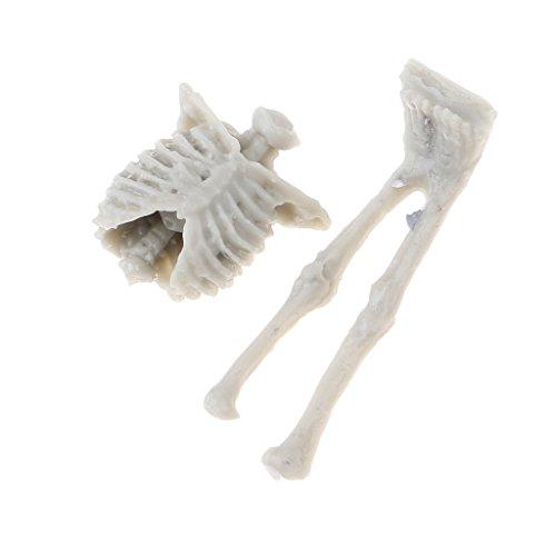 perfeclan 1:35 Modelo de Esqueleto de Calavera de Resina Sin Pintar para Armadura de Arena Landcsape Building 4 Piezas