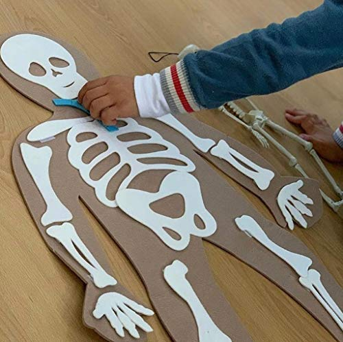 Defieltro Cuerpo Humano de Fieltro con Huesos y Órganos - Juguete Educativo - A Partir de 2 Años