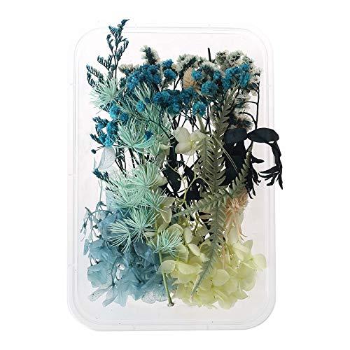 KERDEJAR 1 Caja Mezcla Real de Flores secas para aromaterapia Vela Resina Joyas Plantas secas Fabricación de Flores prensadas Artesanía Accesorios de Bricolaje Uso doméstico Blue Mood